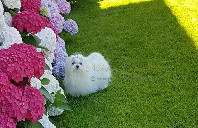 Melania, la flor mas bonita