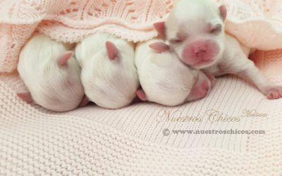 Bebés Aisha 1